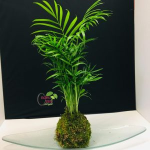 vegetal_kokedama_paris_france
